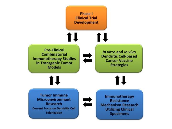 The Hanks Lab >> Tumor Immunology and Immunotherapy - Duke